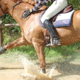 concours équitation cheval au galop