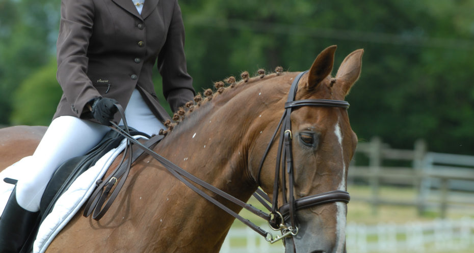 Cours equitation cpa lathus