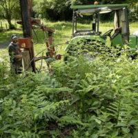 taille et entretien des espaces verts par l'équipe d'insertion