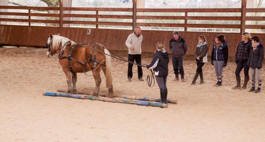 équitation apprentissage attelage
