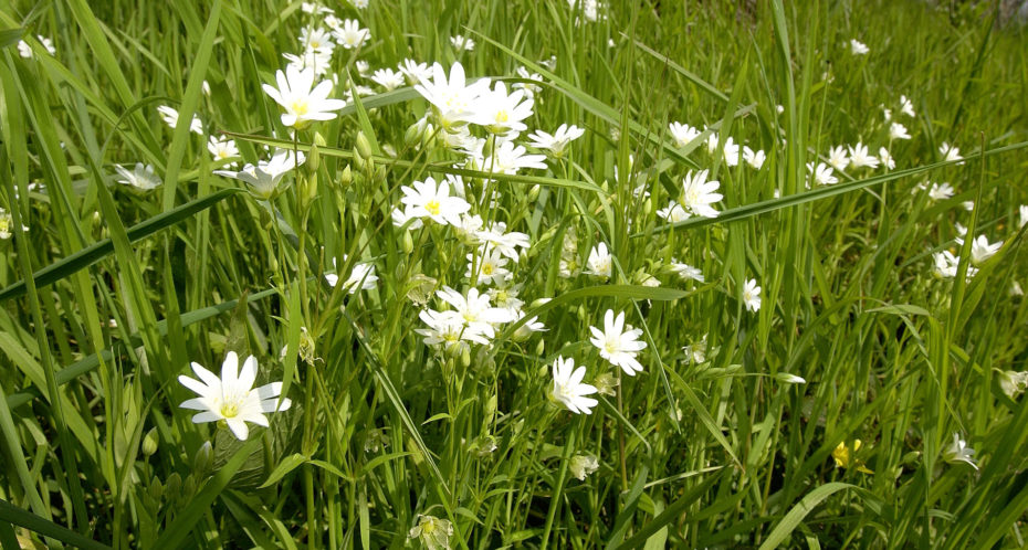 environnement préservé et fleurs sauvages