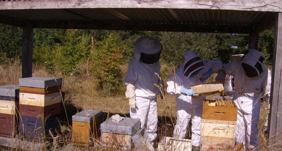 récolte du miel au Peu