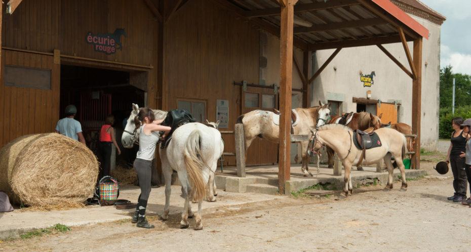 chevaux devant l'écurie