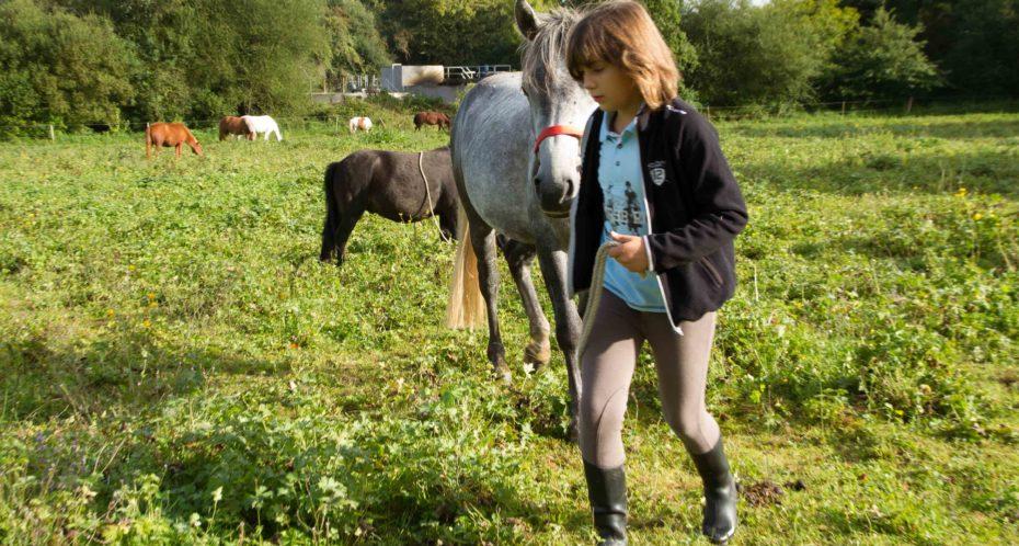 Ballade nature en main cheval