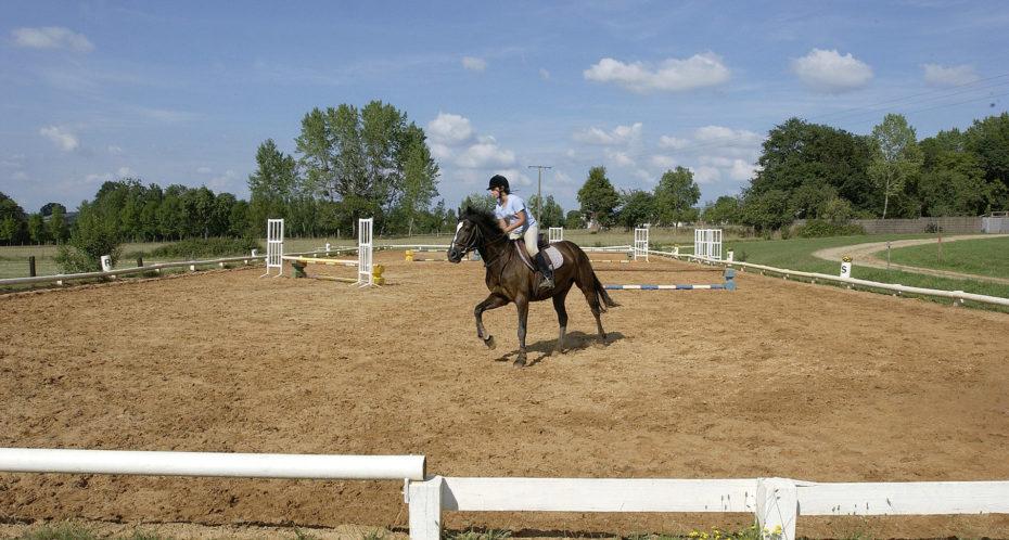 cheval et son cavalier dans la carrière