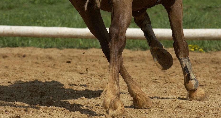 galop et sabots de cheval