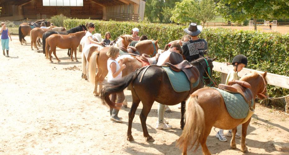 équitation préparation des poneys