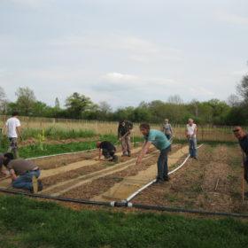 travail au jardin potager