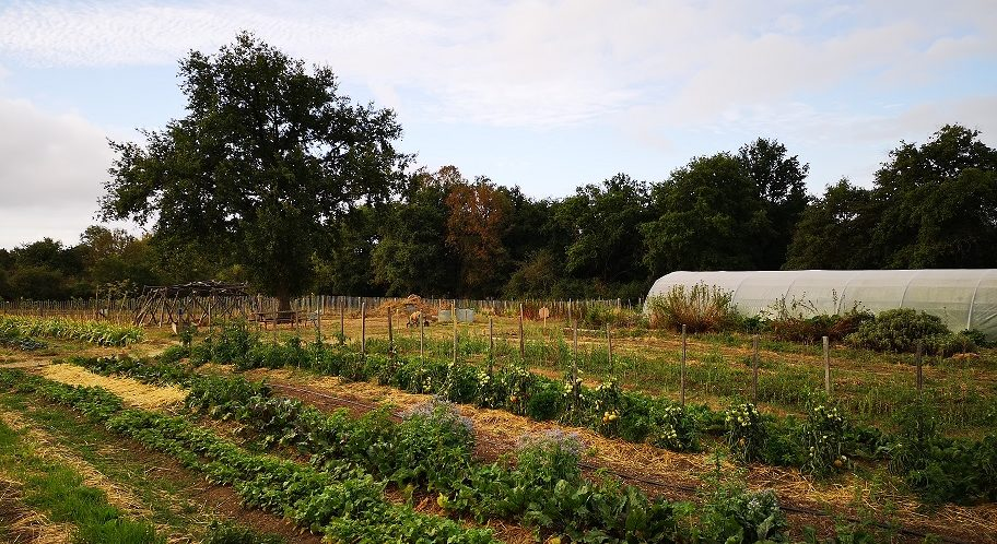 le jardin potager du CPA Lathus