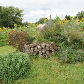 massifs du jardin cpa-vienne